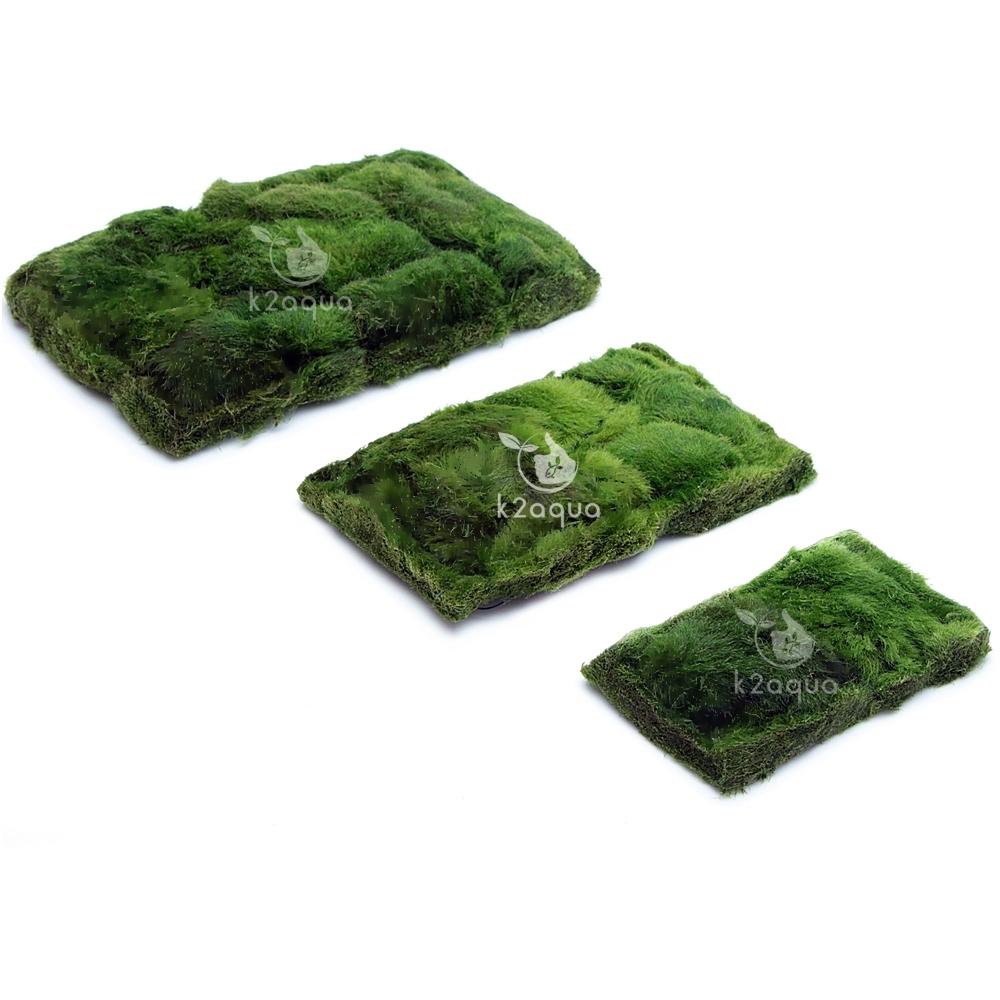Cladophora Carpet on Mesh Marimo Moss Not Ball Live Aquarium Plant Nano Java | eBay